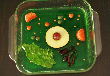 Edible plant cell model with jello